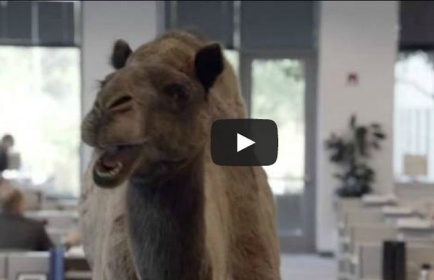 Geico Happy Hump Day Images Video: hump day, yeah! remix