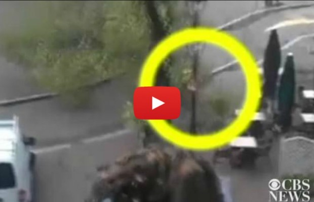VIDEO: Bicyclist almost hit by falling tree