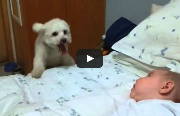VIDEO: Puppy tries to see new baby